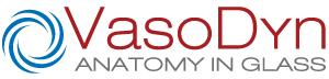 Vasodyn | Anatomy in Glass